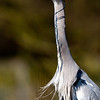 birds-ies photos