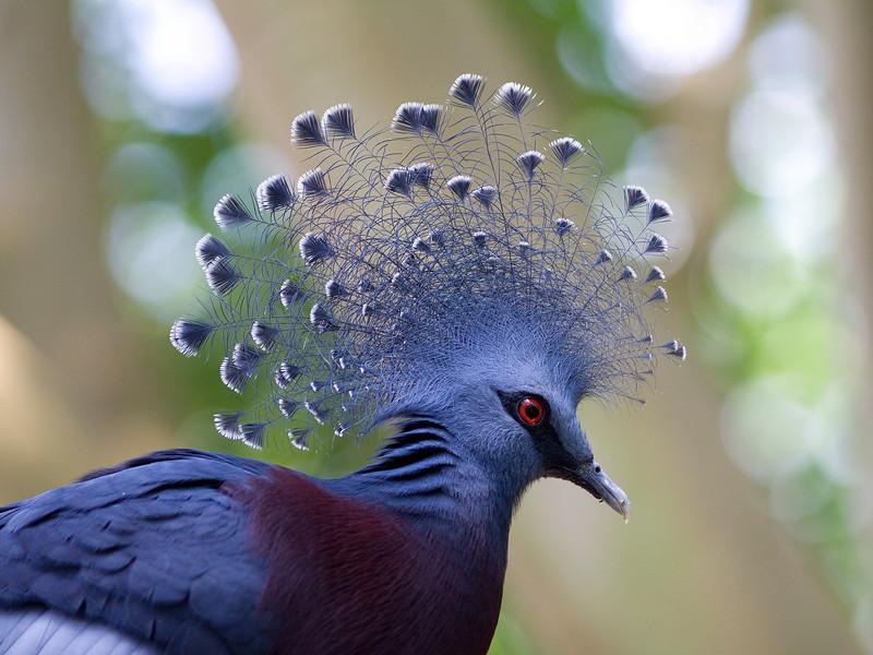 birds-Grimm75