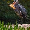 birds-Sydor25