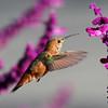birds-tomy