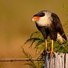birds-Reyno