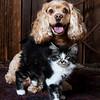 Pets-BaliHai