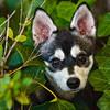 Pets-Sydor25