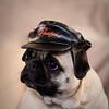 Pets-CrazieCricket