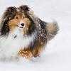 Pets - Signature Shot - Back288