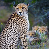 Wildlife - ies photos