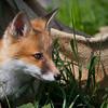 Wildlife - Mstar