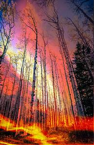 Firey Fall