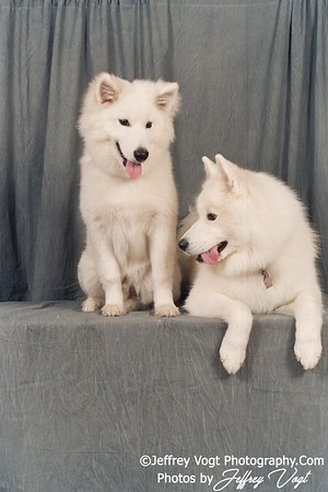 Assorted Dog Portraits