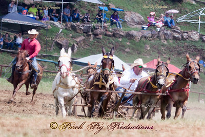 IMG_9767__Sunday_Races__