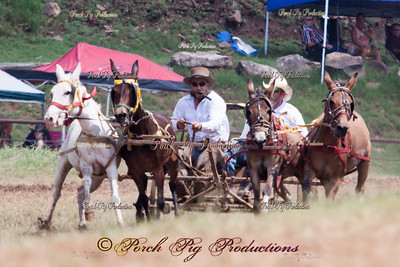 IMG_9764__Sunday_Races__