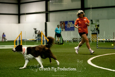 Dog Agility Association of the Ozarks