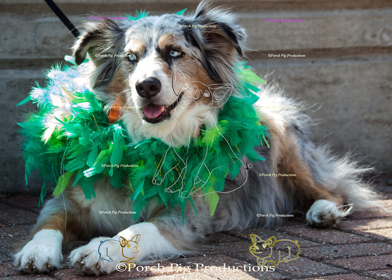 ©PorchPigProductions All Rights Reserved _MG_7953.jpg Pet Costume Contest Brag Tag and Share To Purchase this image please follow the link.   Gallery may be slow to load depending on internet connection.