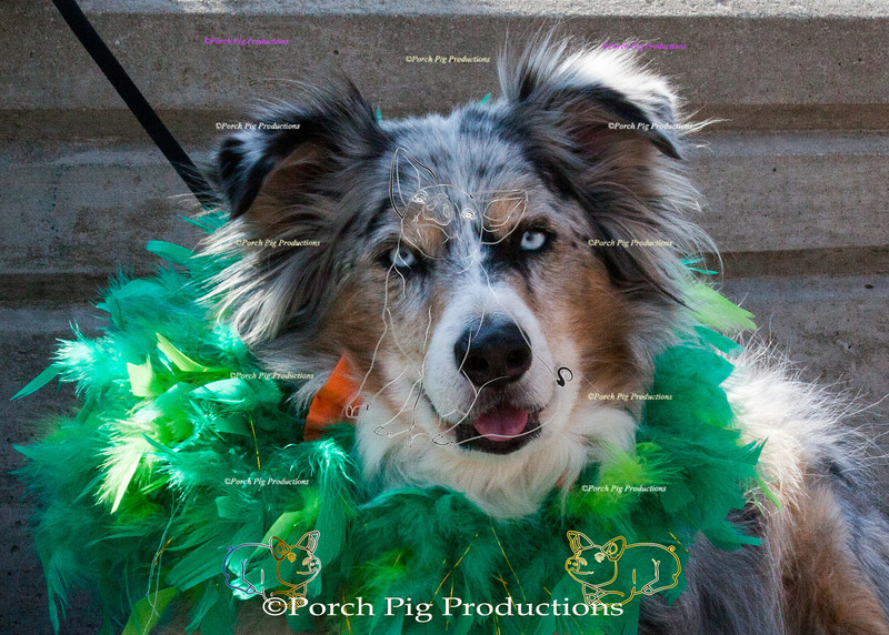 ©PorchPigProductions All Rights Reserved _MG_7952.jpg Pet Costume Contest Brag Tag and Share To Purchase this image please follow the link.   Gallery may be slow to load depending on internet connection.