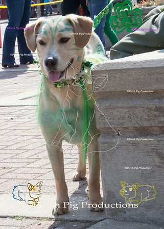 ©PorchPigProductions All Rights Reserved _MG_7911.jpg Pet Costume Contest Brag Tag and Share To Purchase this image please follow the link.   Gallery may be slow to load depending on internet connection.