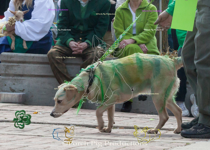 ©PorchPigProductions All Rights Reserved _MG_8010.jpg Pet Costume Contest Brag Tag and Share To Purchase this image please follow the link.   Gallery may be slow to load depending on internet connection.