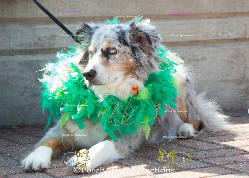 ©PorchPigProductions All Rights Reserved _MG_7955.jpg Pet Costume Contest Brag Tag and Share To Purchase this image please follow the link.   Gallery may be slow to load depending on internet connection.