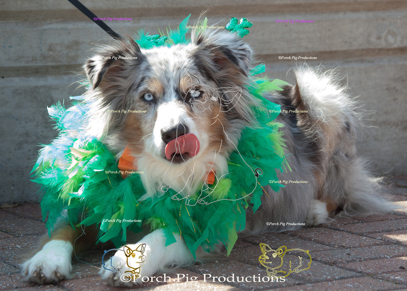 ©PorchPigProductions All Rights Reserved _MG_7954.jpg Pet Costume Contest Brag Tag and Share To Purchase this image please follow the link.   Gallery may be slow to load depending on internet connection.