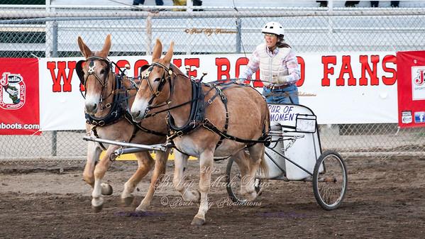 Bishop Mule Days 2015