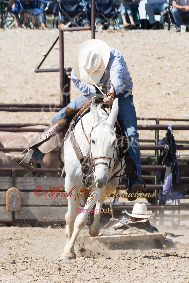 Jake Clark Mule Days 2015 Rodeo Order#_PIG_6006 www.porchpigproductions.org