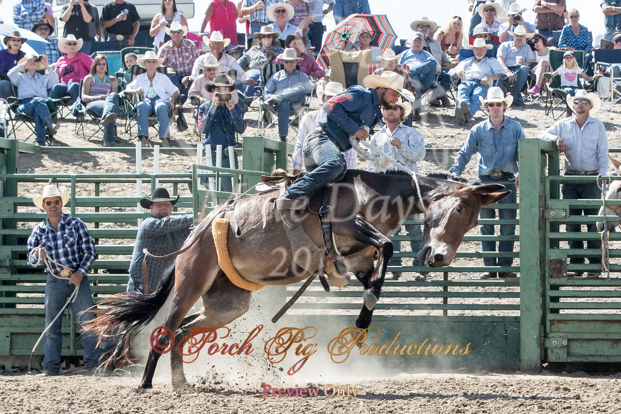 Jake Clark Mule Days 2015 Rodeo Order#_PIG_6261 www.porchpigproductions.org