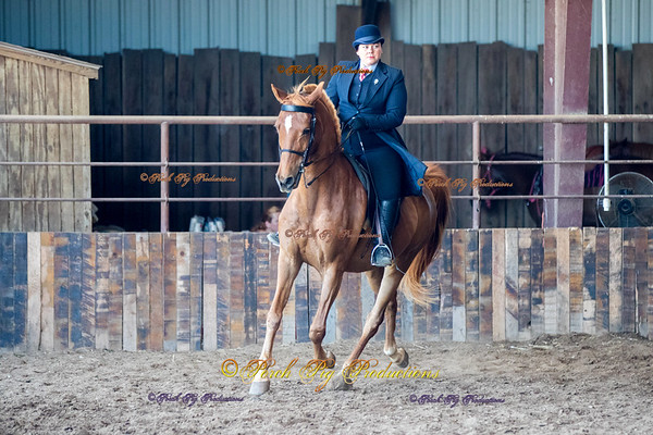 DS7I0534 To Order Images please follow link:  http://www.porchpigproductions.org/PPSales-Galleries/2016-Sales-Galleries/4-States-Horse-Show/4-States-Saddle-Club