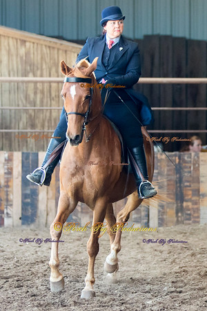DS7I0535 To Order Images please follow link:  http://www.porchpigproductions.org/PPSales-Galleries/2016-Sales-Galleries/4-States-Horse-Show/4-States-Saddle-Club