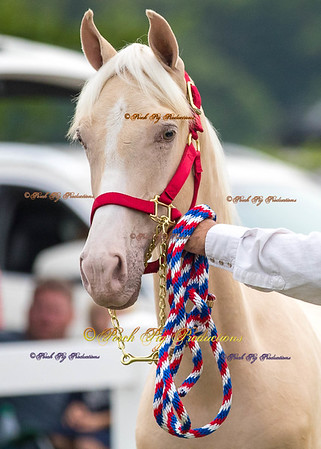 Order # DS7I2069___Giated horse show 2016__© Porch Pig Productions
