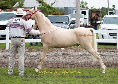 Order # DS7I2065___Giated horse show 2016__© Porch Pig Productions