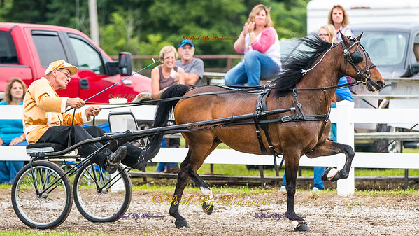Order # DS7I2207___Giated horse show 2016__© Porch Pig Productions
