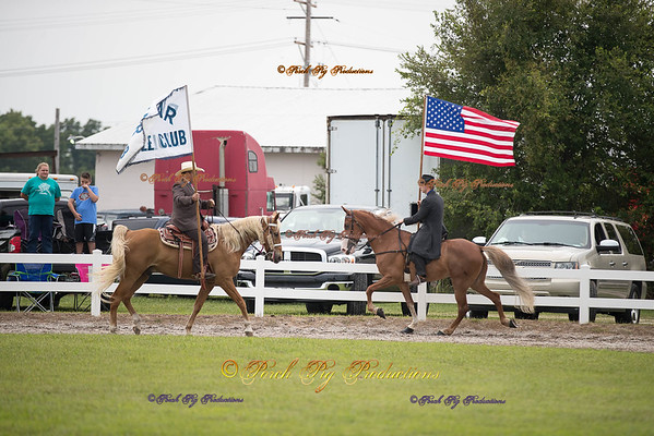 Order # DS7I1989___Giated horse show 2016__© Porch Pig Productions