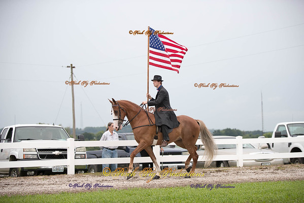 Order # DS7I1985___Giated horse show 2016__© Porch Pig Productions