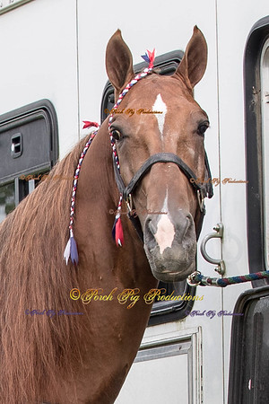 Order # DS7I1742___Giated horse show 2016__© Porch Pig Productions