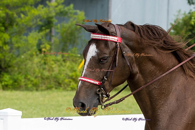 Order # DS7I1764___Giated horse show 2016__© Porch Pig Productions