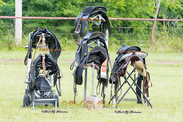 Order # DS7I1749___Giated horse show 2016__© Porch Pig Productions