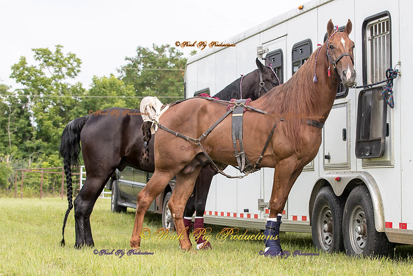 Order # DS7I1741___Giated horse show 2016__© Porch Pig Productions