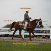 Order # DS7I2193___Giated horse show 2016__© Porch Pig Productions