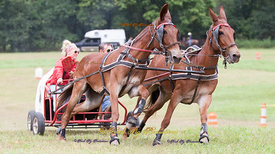 Southern Style Mule Company Order # IMG_7370___Big Mules__© Porch Pig Productions