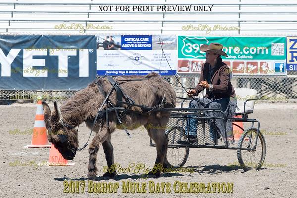 PPP_4976134 Shaggy Donkey