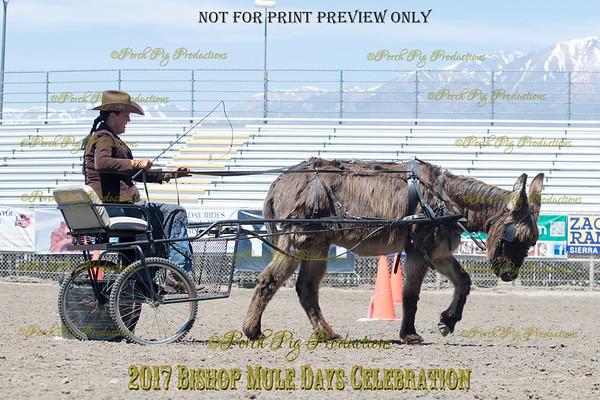 PPP_4981134 Shaggy Donkey