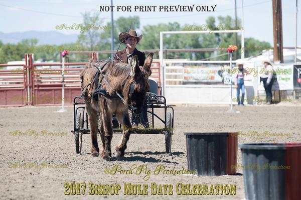 PPP_4977134 Shaggy Donkey