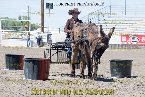 PPP_4980134 Shaggy Donkey