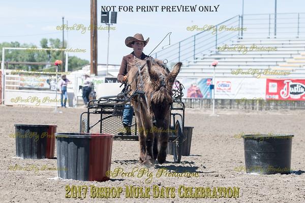 PPP_4979134 Shaggy Donkey
