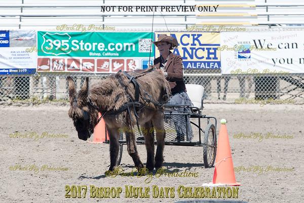 PPP_4975134 Shaggy Donkey
