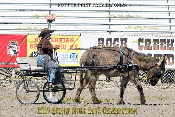 PPP_4974134 Shaggy Donkey