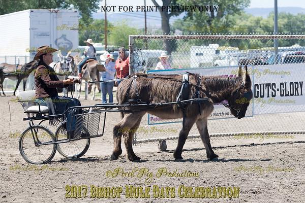 PPP_4971134 Shaggy Donkey