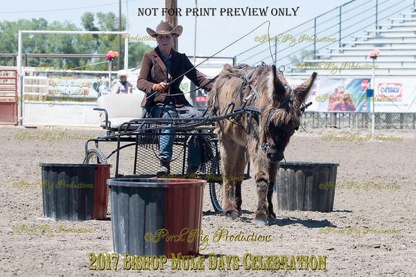 PPP_4978134 Shaggy Donkey