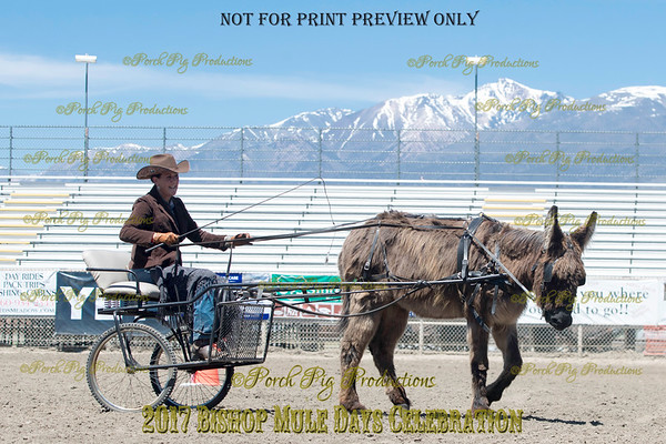 PPP_4982134 Shaggy Donkey