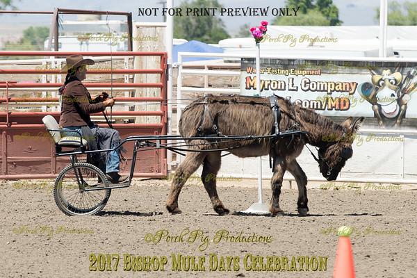 PPP_4973134 Shaggy Donkey