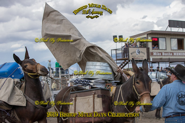 PPP_1586 May 25, 2019 @PORCH PIG PRODUCTIONS